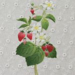 〜図鑑〜 苺とラズベリー  コットンレース・染和紙・刺繍糸・ビーズ
