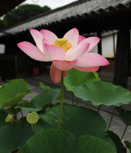 21057東福寺