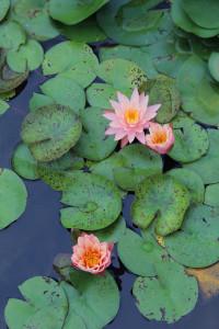 2015.8 水性植物園